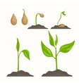 Plant evolution life cycle growth phases vector image