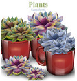 cactus flowers background plant growing in vector image