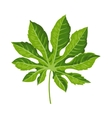 Full leaf of fatsia japonica palm tree vector image vector image