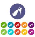 gallbladder icons set color vector image vector image