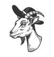 goat in broad brim hat engraving vector image