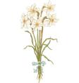 bunch daffodils vector image