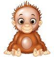 Cartoon funny baby orangutan isolated vector image vector image