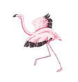 flamingo preparing to fly hand drawn vector image