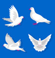 pigeons or white dove birds flying flat vector image vector image