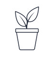 potted plant natural decoration interior vector image vector image