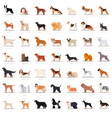 big set flat dogicons vector image