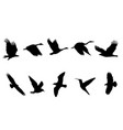 bird flying black silhouettes vector image