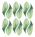 botanicals pattern green leaves herb background ve vector image
