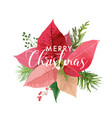 christmas winter poinsettia flower card vector image vector image