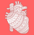 human heart fashion vector image