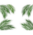 tropical green palm leaves on four sides set vector image vector image
