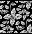 graphic oregano pattern vector image