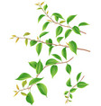 tree branches with green leaves isolated vector image