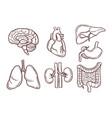 hand drawn of human organs medical vector image