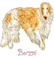 borzoi dog breed vector image vector image