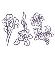 hand drawn sketch of iris flower vector image vector image