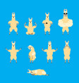 lama alpaca set poses and motion animal happy and vector image