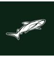 shark sport team mascot design template vector image