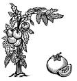 tomato brunch vector image