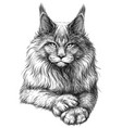 cat graphic artistic hand-drawn sketch vector image vector image