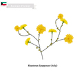 Rhanterum Epapposum The Popular Flower of Kuwait vector image vector image