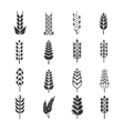 Wheat ears icons vector image vector image