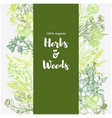 vertical green banner with color medicinal herbs vector image