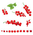 red currant set vector image vector image