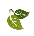 Two spring leaves simple icon nature and gardening vector image