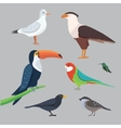 Popular birding species collection vector image