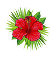 red bright hibiscus flower with green palm leaves vector image