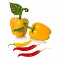 Set of chilli fruit stock vector image