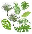 set of exotic leaves from palm trees or tropical vector image vector image