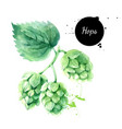 watercolor hops painted isolated fresh superfood vector image