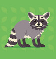 cute raccoon standing of a vector image vector image