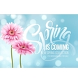 Gerbera Flower Background and Spring is coming vector image vector image