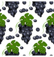 grapevineseamless background vector image