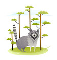 raccoon in wild nature with trees vector image