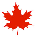 red maple leaf vector image