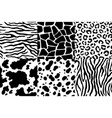 animal skin pattern wildlife zebra texture tiger vector image