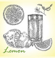 collection of highly detailed hand drawn lemones vector image vector image