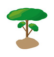 isolated big tree vector image vector image