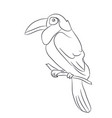 bird sitting on a branch lines vector image vector image