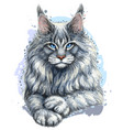 cat graphic artistic hand-drawn color sketch vector image vector image
