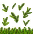 fir tree isolated isolated white background vector image