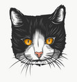 sketch a stylized kitten s face vector image