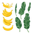 summer set with bananas and palm leaves isolated vector image