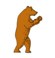 brown bear boxing stance drawing vector image vector image