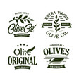 olive oil premium quality olives branch vintage vector image